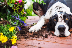 Dog vs. Yard: How to Keep Your Landscape and Your Pet Happy